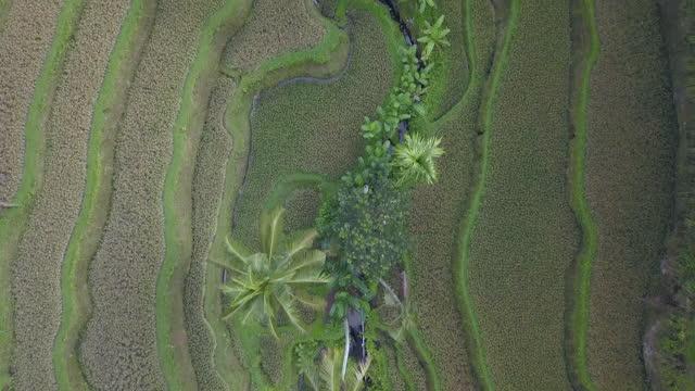 tegallalang rice terrace / tegallalang village, bali, indonesia - uphill stock videos & royalty-free footage