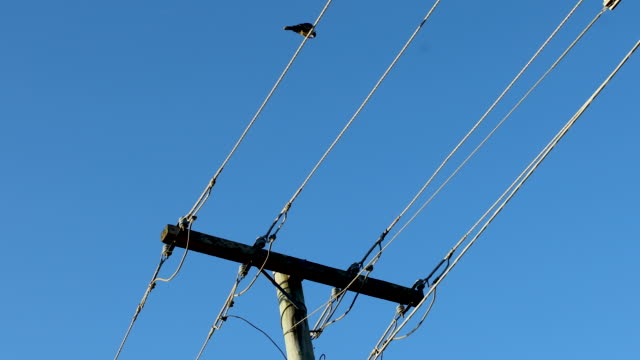telephone pole and wires with single bird sitting on wires - telephone line stock videos & royalty-free footage