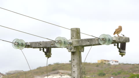 telephone pole horned owl scarecrow bird - landline phone stock videos & royalty-free footage