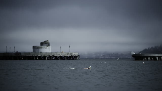 telephoto lens, senior woman swims in san francisco bay. - baia di san francisco video stock e b–roll