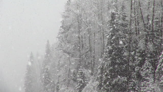 telephoto shot of snow covered evergreen forest during heavy puffy snowflake snow storm. - 吹雪点の映像素材/bロール