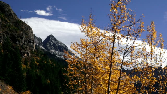 telephoto shot of snow covered jagged mountain peaks with yellow leafed trees blowing in the wind in foreground. - 色が変わる点の映像素材/bロール