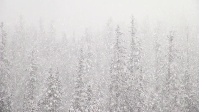 Telephoto shot of snow covered trees in mountains during heavy puffy snowflake snow storm.