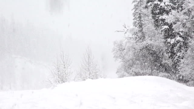 vidéos et rushes de telephoto shot of snow covered trees in mountains during heavy puffy snowflake snow storm. - montana
