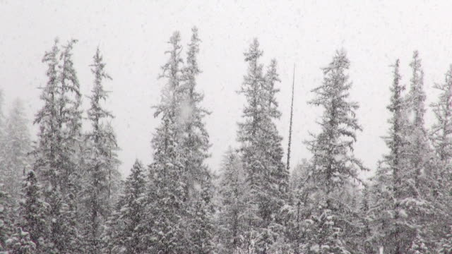 telephoto shot of snow covered trees in mountains during heavy puffy snowflake snow storm. - glacier national park us stock videos and b-roll footage