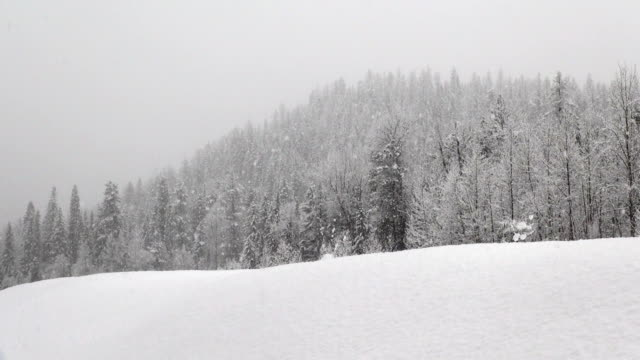 telephoto shot of snow covered trees in mountains during heavy puffy snowflake snow storm. - 深い雪点の映像素材/bロール