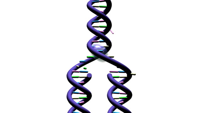 Telomere Part 2 - on white background