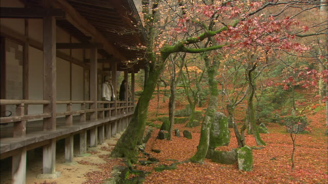 tempe visitors gaze at autumn colors. - fukuoka prefecture stock videos & royalty-free footage