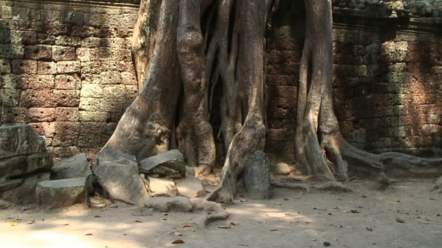 MS TU Temple Taprohn and old tree roots, Angkor, Siem Reap, Cambodia