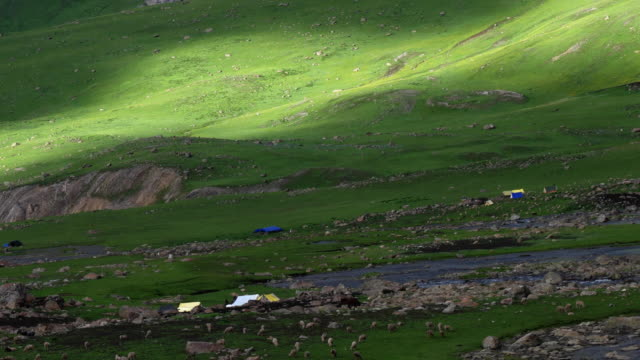a temporary bakarwal settlement between nichnai pass and vishansar lake during the summer months for their sheep to graze the open green pastures - etnia indo asiatica video stock e b–roll