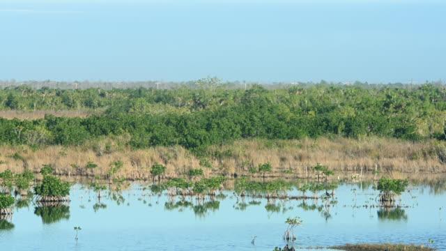 vídeos y material grabado en eventos de stock de diez mil islas paisaje de manglares en everglades city florida usa - área silvestre