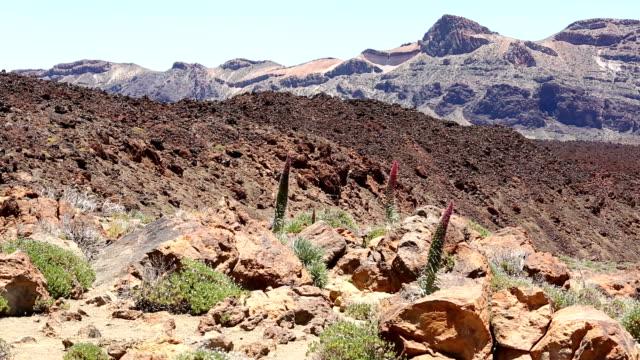 Tenerife, Teide  / Canary Islands.