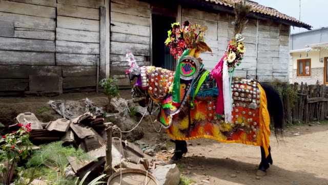tenggerese paing decorates a horse to celebrate a haircut ceremony for teenagers who are known as 'tugel kuncung' avoiding misfortune and hoping for... - tengger stock videos & royalty-free footage