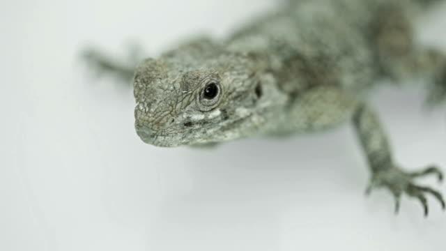 tensed glance of green lizard - sideways glance stock videos and b-roll footage