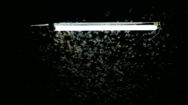 termite flying around lighting. - zoology stock videos & royalty-free footage