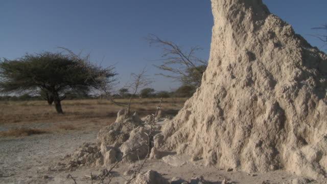 termite mound detail, tilt up, etosha national park, namibia - ティルト点の映像素材/bロール