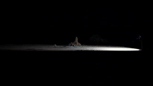 termite mound is illuminated by a reflector while an herbivorous animal stands nearby, under the starry night sky, on a farm at the waterberg... - herbivorous stock videos & royalty-free footage