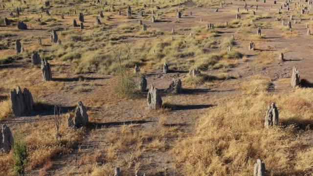 termite mounds - wildlife stock videos & royalty-free footage
