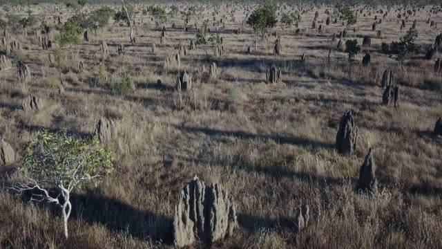 termite mounds - queensland stock videos & royalty-free footage