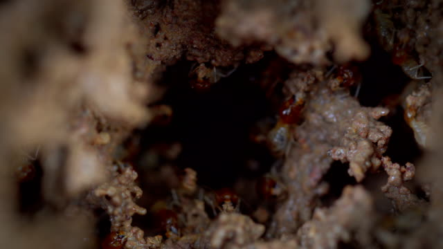 termites damage home - cross section stock videos & royalty-free footage