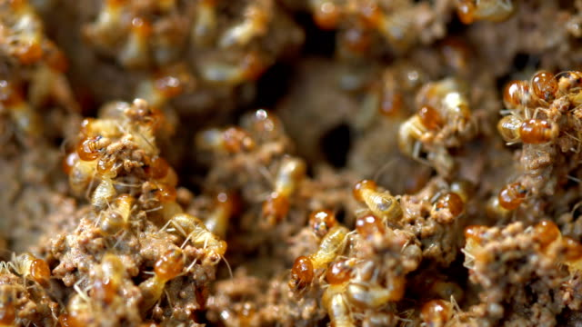 termites damage home - pests stock videos & royalty-free footage