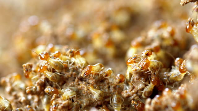 termites damage home - cut video transition stock videos & royalty-free footage