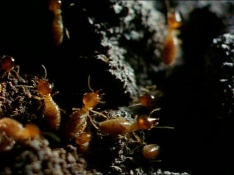 termites devour a stump. - cricket stump stock videos & royalty-free footage
