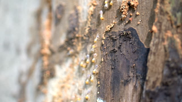termites travel on the wooden tree - tracery stock videos and b-roll footage