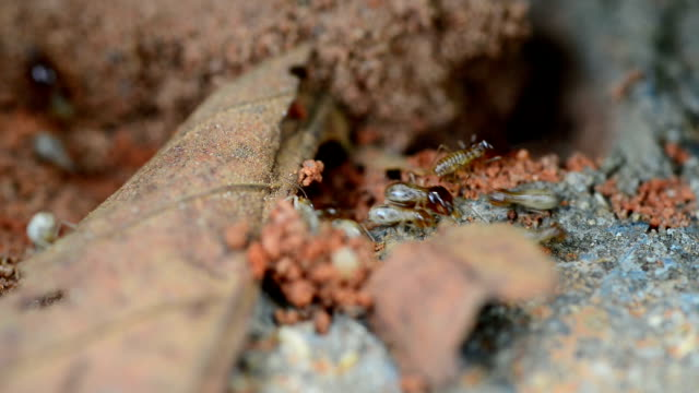 termites - deterioration stock videos and b-roll footage