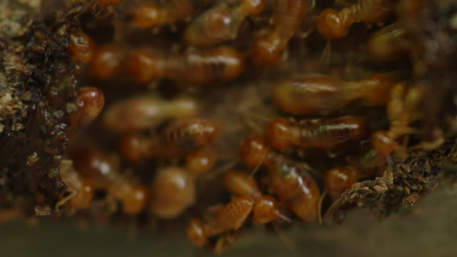 termites workers repairing a tunnel. - building activity stock videos & royalty-free footage