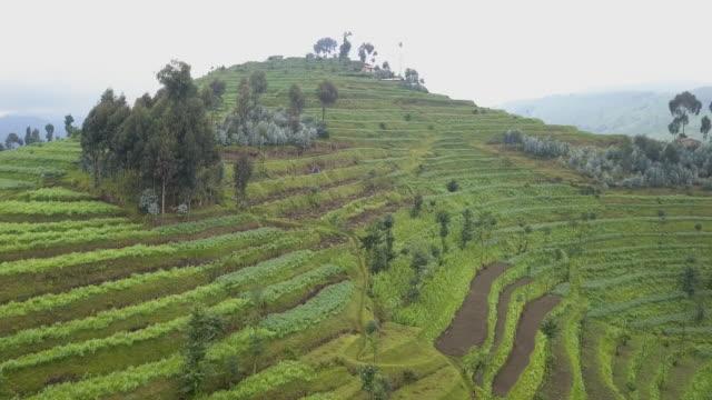 中央アフリカの国、ルワンダのテラス農業 - ルワンダ点の映像素材/bロール