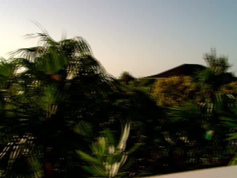 ms,  pan,  terrace overlooking tropical foliage,  harbour island,  bahamas - fan palm tree stock videos & royalty-free footage