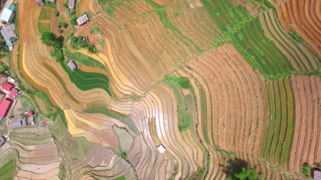 Terrace rice field from drone view