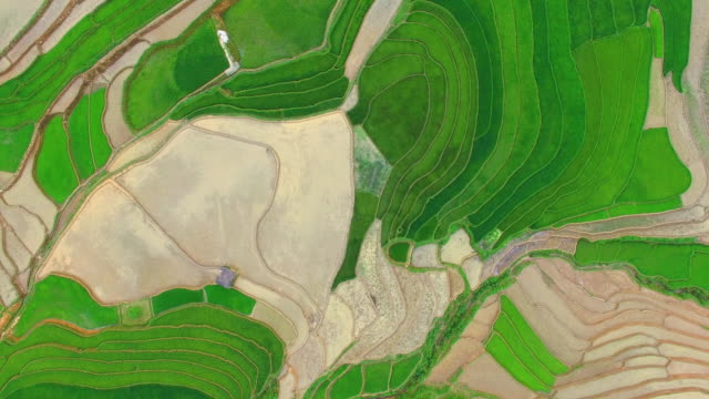 terrace rice field from drone view - rice paddy stock videos and b-roll footage