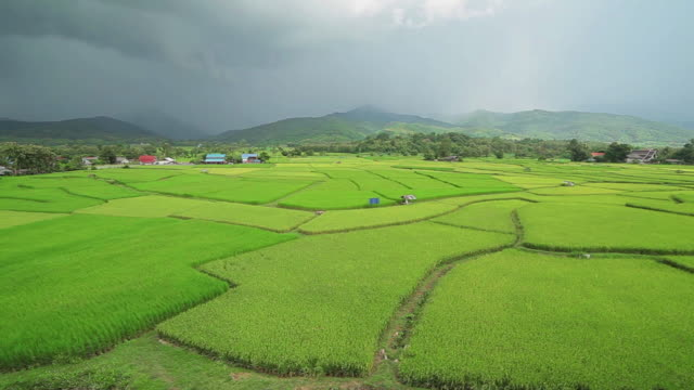 Terrace rice fields in storm