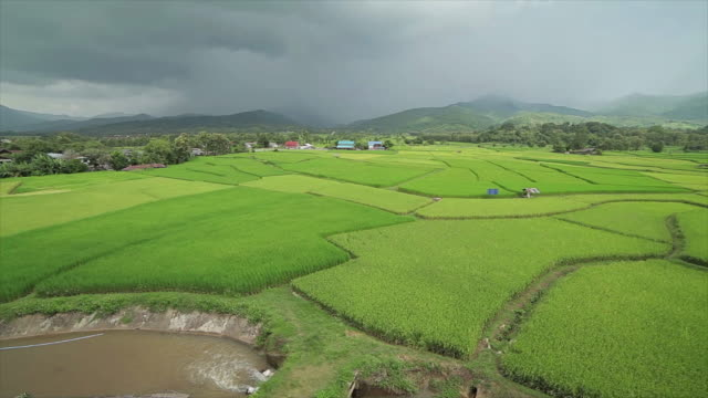 Terrace rice fields in storm