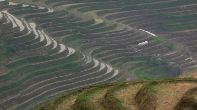 ha, ms, terrace rice paddies, ping'an, china - rice terrace stock videos and b-roll footage