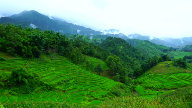 terraced fields in sa pa, lào cai province, vietnam, asia - sa pa stock videos and b-roll footage