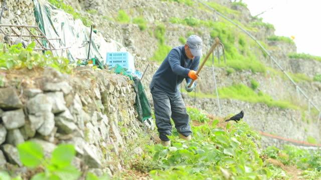 vídeos y material grabado en eventos de stock de terraced fields in yusumizugaura, matsuyama - actividad de agricultura