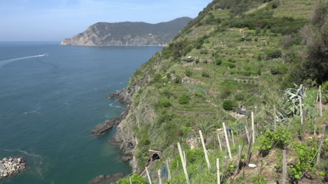 Terraced fields of Vernazza at rocky coast