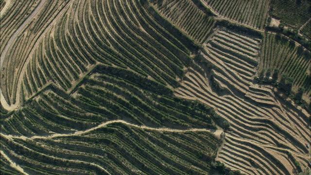 vídeos de stock e filmes b-roll de aerial ws terraced fields / vila real, portugal - vinha
