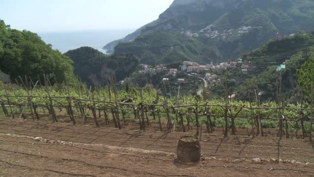 ms terraced lemon grove and vineyards on side of hill / amalfi, campania, italy - wäldchen stock-videos und b-roll-filmmaterial