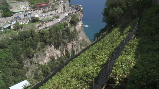 vídeos de stock e filmes b-roll de ms terraced lemon grove on side of hill / amalfi, campania, italy - bosque
