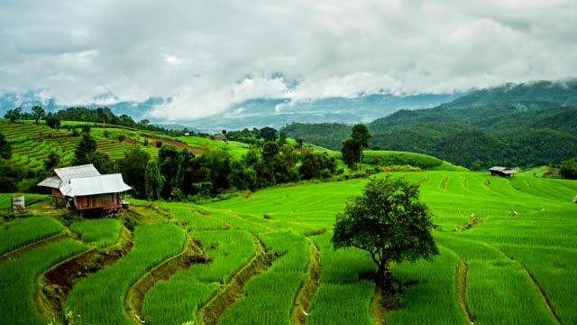 Terraced Paddy Field in Mae-Jam Village, Thailand.