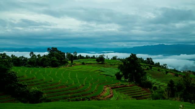 Paddy campo terraplenado de Mae-Jam Village, Tailandia.