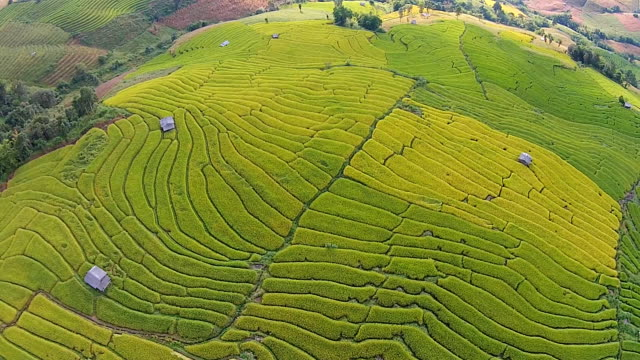 Terraced Paddy Field in Mae-Jam Village, Thailand.
