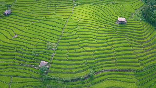 vidéos et rushes de rizière en terrasses à pa pong pieng - colline