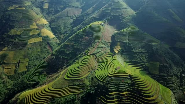 terraced paddy fields  farm on hilly or mountainous terrain, normally farming in east, south, and southeast asia - sa pa stock videos and b-roll footage