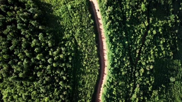 通常の東、南、農業、丘陵や山地の地形と東南アジアの棚田ファーム - ホーチミン市点の映像素材/bロール