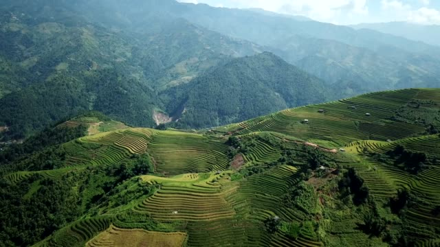 terraced paddy fields  farm on hilly or mountainous terrain, normally farming in east, south, and southeast asia - vietnam stock videos & royalty-free footage